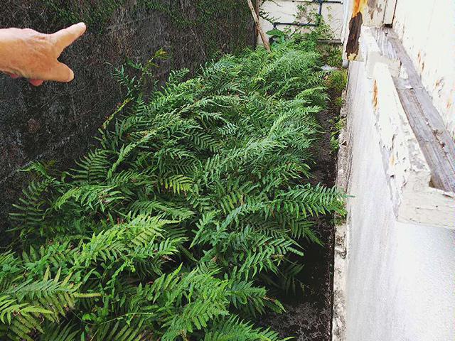 庭リフォーム ビフォーアフター Before写真
